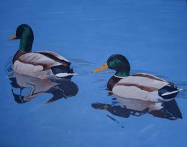 Pair of Mallards