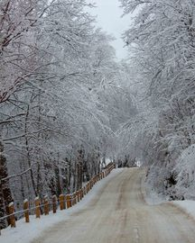 Road to Winter Wonderland